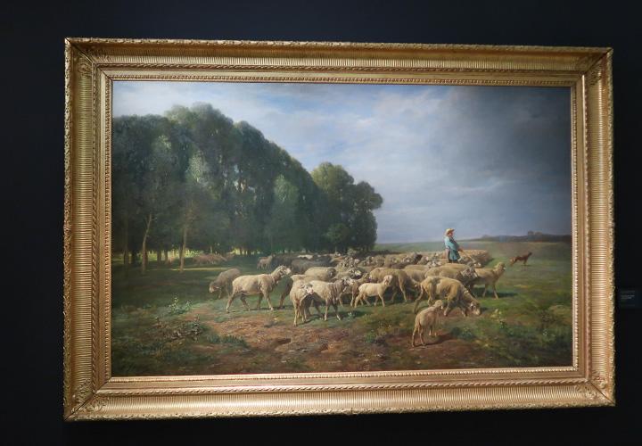 Troupeau de moutons dans un paysage